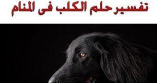 رؤية الكلب في المنام
