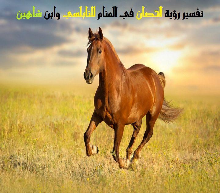 صورة تطرق للأحلام وأنت بالمنام ترى كل الأمنيات , رؤية الحصان في المنام 1898
